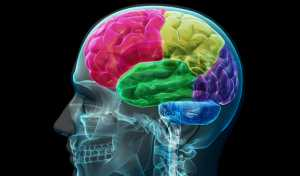 ¿Qué zona de tu cerebro es dominante?